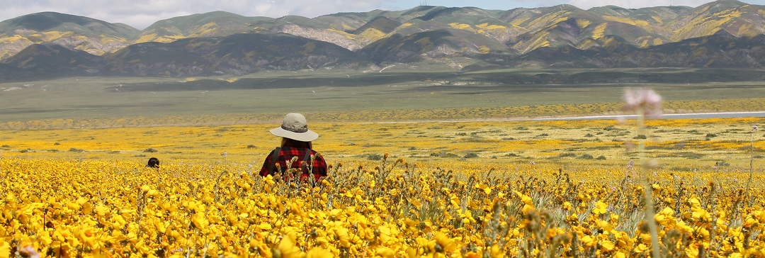 Walking through a field of wildflowers at Carrizo Plain National Monument